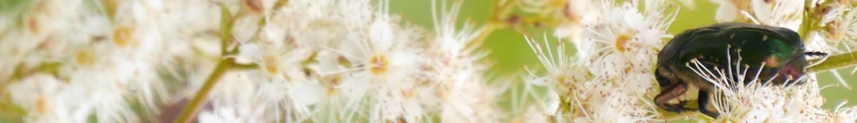 Über Tiere, Pflanzen und Lebendiges überhaupt